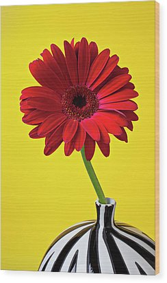 Red Mum Against Yellow Background Wood Print by Garry Gay
