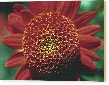 Wood Print featuring the photograph Red Mum Center by Sally Weigand