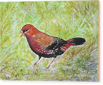 Red Munia Wood Print