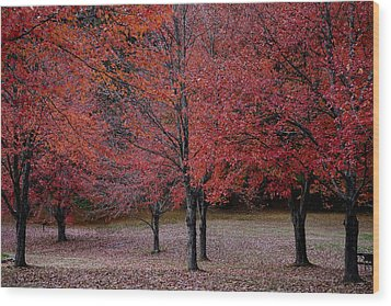 Red October Wood Print