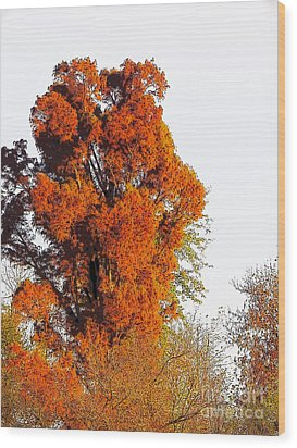 Red-orange Fall Tree Wood Print