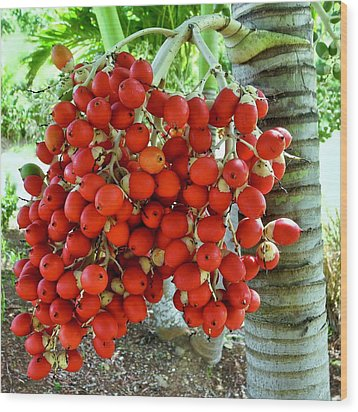 Red Palm Tree Fruit Wood Print by Kirsten Giving