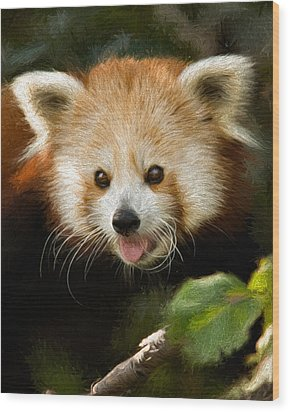 Wood Print featuring the photograph Red Panda by Lana Trussell