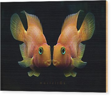 Red Parrot Fish Wood Print by MariClick Photography