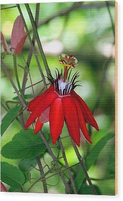 Red Passion Wood Print by Leo Miranda