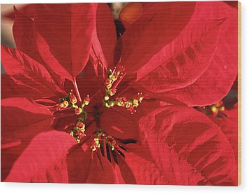 Wood Print featuring the photograph Red Poinsettia Macro by Sally Weigand