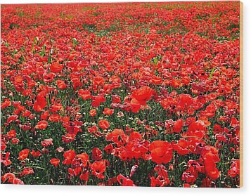 Red Poppies Wood Print by Juergen Weiss