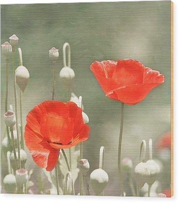 Red Poppies Wood Print by Kim Hojnacki