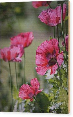 Red Poppies Wood Print by Lisa L Silva