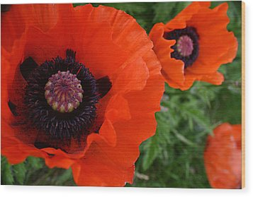 Red Poppies Wood Print by Lynne Guimond Sabean