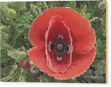 Wood Print featuring the photograph Red Poppy Flower 2 by Jean Bernard Roussilhe