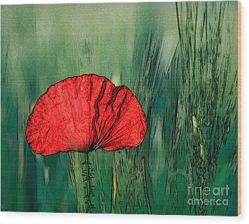 Wood Print featuring the photograph Red Poppy Flower by Jean Bernard Roussilhe