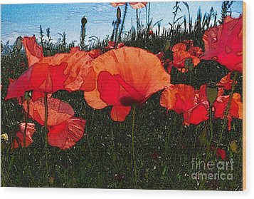 Wood Print featuring the photograph Red Poppy Flowers In Grassland by Jean Bernard Roussilhe