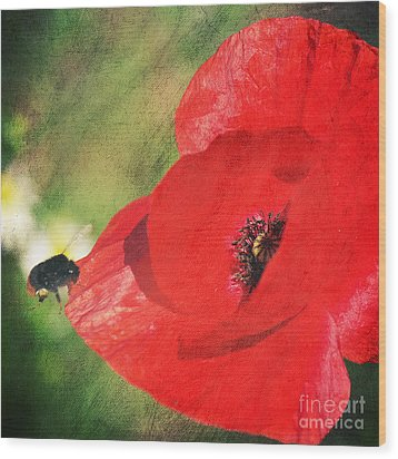 Red Poppy Impression Wood Print by Angela Doelling AD DESIGN Photo and PhotoArt
