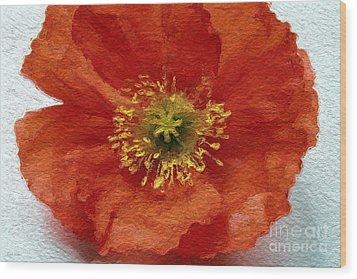 Red Poppy Wood Print by Linda Woods