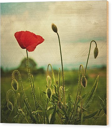 Red Poppy Wood Print by Violet Gray