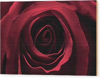 Red Red Rose 2 Wood Print by Sheryl Thomas