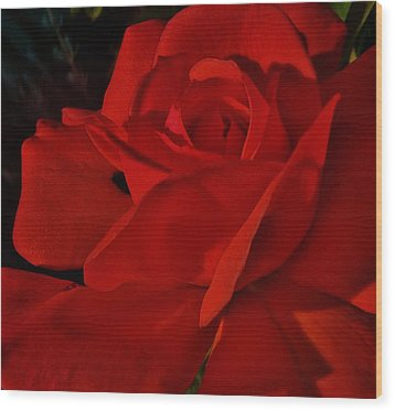 Red Red Rose  Wood Print