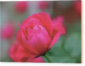 Wood Print featuring the photograph Red Red Rose by Sheryl Thomas