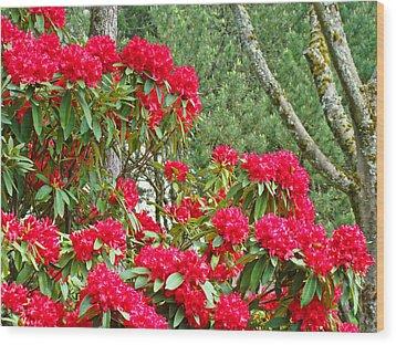 Red Rhododendron Garden Art Prints Rhodies Landscape Baslee Troutman Wood Print by Baslee Troutman