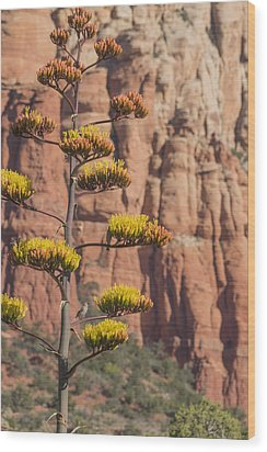 Red Rocks And Century Plant Wood Print by Laura Pratt