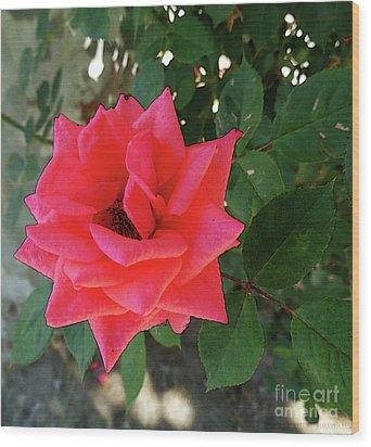Pink Rose  Wood Print by Don Pedro De Gracia