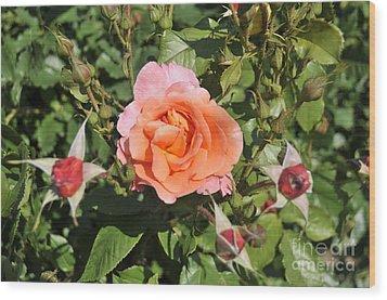 Red Rose 5 Wood Print by Rudolf Strutz