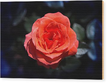 Red Rose Art Wood Print