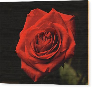 Red Rose At Night Wood Print