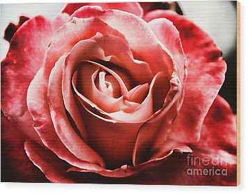 Wood Print featuring the photograph Red Rose  by Mariola Bitner