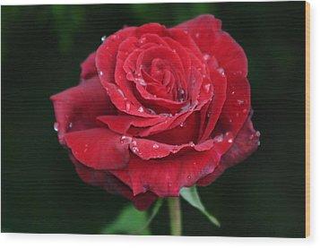 Red Rose Wood Print by Martina Fagan