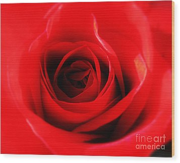Wood Print featuring the photograph Red Rose by Nina Ficur Feenan