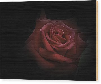 Wood Print featuring the photograph Red Rose by Ryan Photography