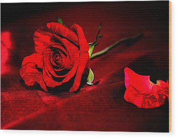 Red Rose  Wood Print by Serena King
