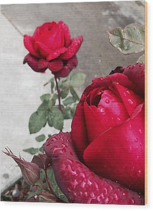 Red Roses Wood Print by Beverly Johnson