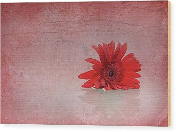 Red Scent Wood Print