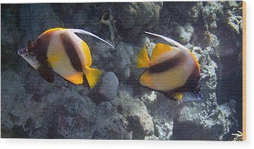 Red Sea Bannerfish 2 Wood Print