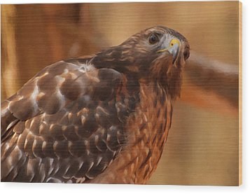 Red Shouldered Hawk 1  Wood Print by Chris Flees