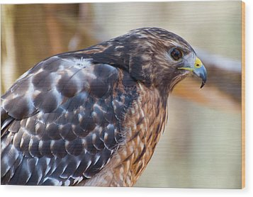 Red Shouldered Hawk 2 Wood Print by Chris Flees