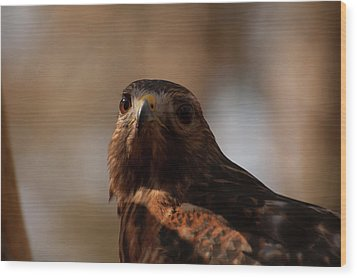 Red Shouldered Hawk Close Up Wood Print by Chris Flees