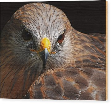Red-shouldered Hawk Wood Print by Lorenzo Cassina