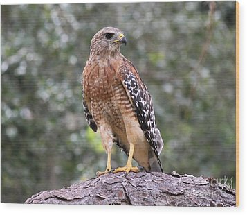 Red Shouldered Hawk Wood Print by Theresa Willingham