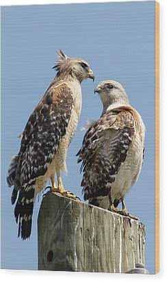 Red-shouldered Hawks Making Out Wood Print by Phil Stone