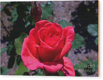 Red Splendor Wood Print by David Bishop