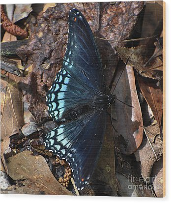 Wood Print featuring the photograph Red Spotted Purple Admiral by Skip Willits