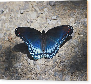 Red-spotted Purple Butterfly Wood Print by Kerri Farley
