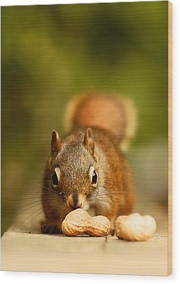 Red Squirrel   Wood Print by Cale Best