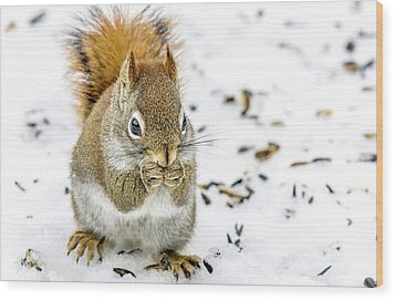 Red Squirrel Wood Print by Irwin Seidman