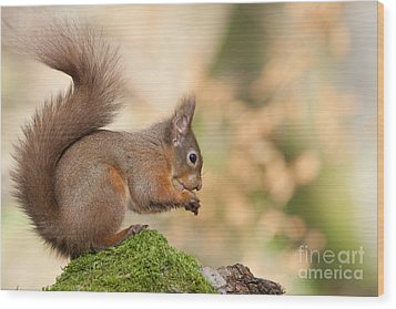 A Moment Of Meditation - Red Squirrel #27 Wood Print