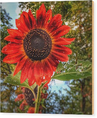 Wood Print featuring the photograph Red Sun by Jame Hayes
